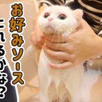 お好み焼きソースを落とすために猫ちゃんを洗ったら・・・!?