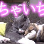 仲睦まじい猫ちゃんたちのあまりの可愛さに飼い主さんもメロメロ〜♡