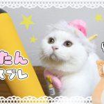 可愛すぎ注意??コスプレ猫ちゃんに癒やされる〜♡
