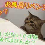 お風呂で一緒に遊ぶ猫ちゃんたちにキュン♪