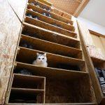 下駄箱探検をしていたら他の猫ちゃんにドアを閉められてしまった三毛猫さんは・・・?