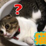 桶にすっぽり!ジャストフィットな可愛い子猫ちゃんに胸キュン♡