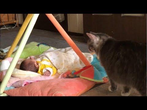 赤ちゃんとの関わり方に迷う優しそうな猫ちゃんにキュン!!