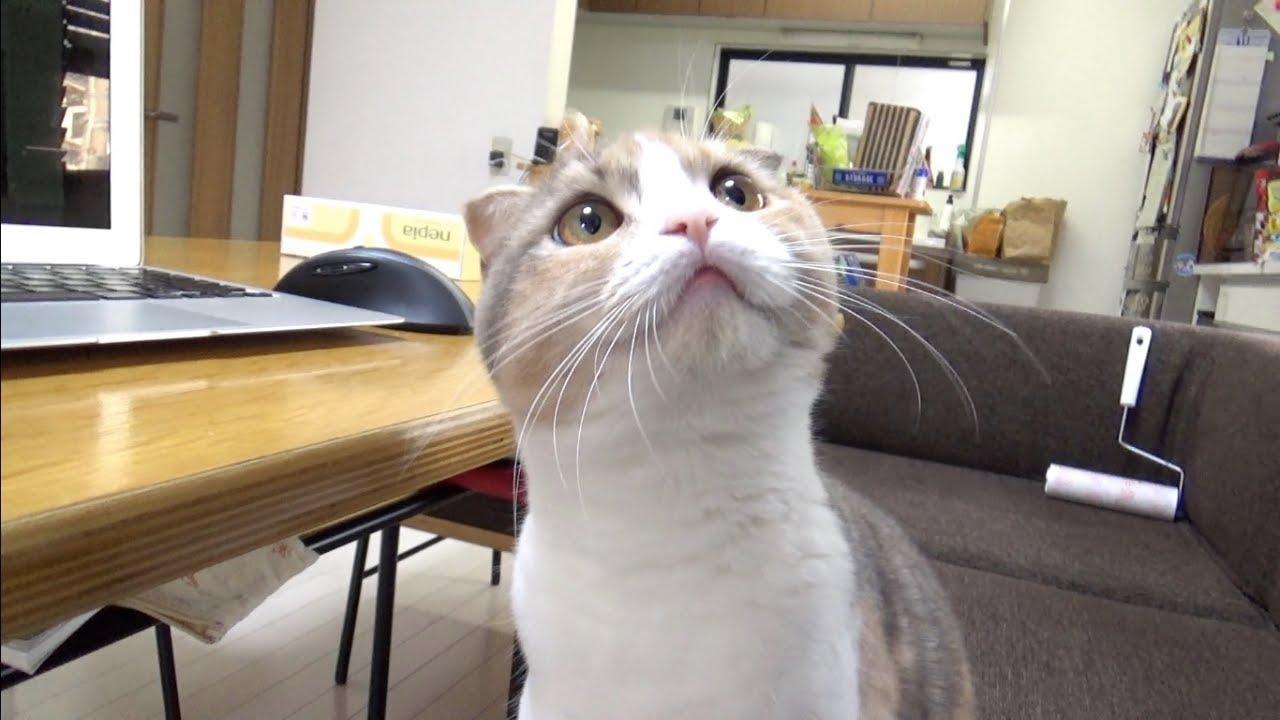 すごい食いつき!?レーザーポインターに夢中な猫ちゃんたち♡