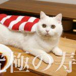 世にも可愛いネコ寿司がたまらない〜♡