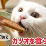 カツオに夢中な白猫さんに癒やされる〜♡