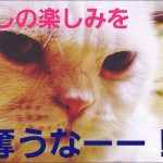 ダイエットは苦手・・・?まんまる猫ちゃんに癒やされる〜♡