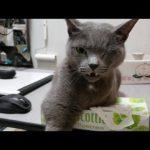 猫ちゃんと飼い主さんのティッシュ攻防戦が激しすぎる〜!?♡