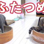 爪とぎが気に入りすぎて他の猫ちゃんに意地悪する猫ちゃん!?♡