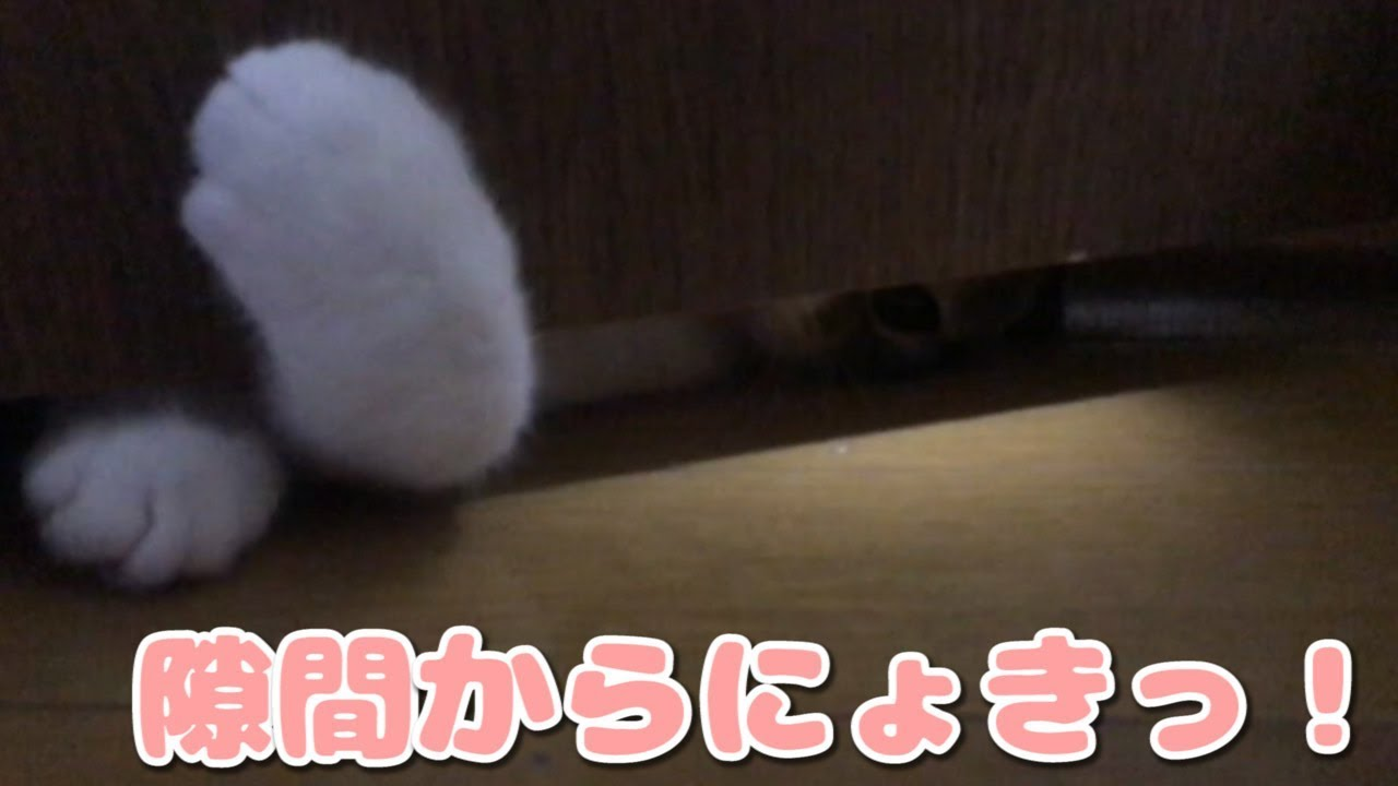 隙間から猫ちゃんの肉球がひょっこりはん!可愛すぎる〜♡