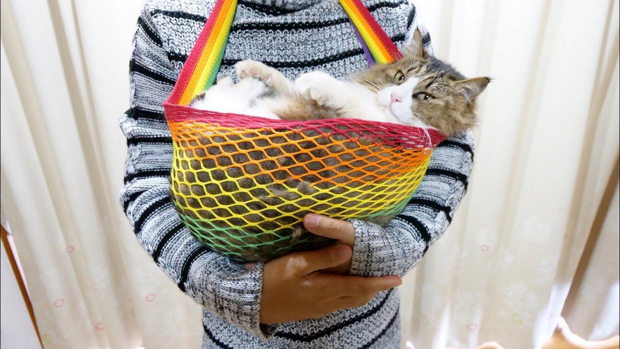 抱っこ紐であやされる猫ちゃんがめちゃ可愛い〜♡