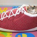 めちゃかわ♡靴型クッションにすっぽりな猫ちゃん!