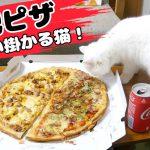 ピザをクンクン♡興味津々な白猫ちゃん(*´ω`*)