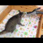 掃除機で吸われてたまらん〜♡な猫ちゃんが面白すぎる(´ε` )