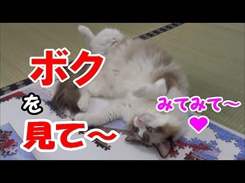パズル中に猫ちゃん乱入!?はたしてパズルは完成したのでしょうか・・・?♡
