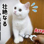 猫ちゃんが現行犯逮捕?♡物語仕立てで超かわいい件(´・ω・`)
