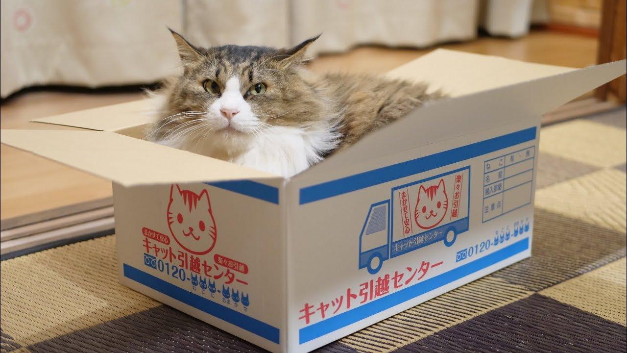 お引越しでーす♡猫ちゃんマークの引越ダンボールが可愛すぎる件・・・!