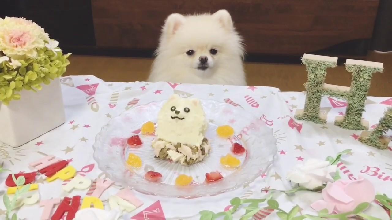 ハッピーバースデイ♡お手製ポメラニアンちゃんの似顔絵ケーキが凄すぎる〜!