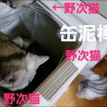 ご飯後なのに・・・猫缶を求めゴミ箱の中に猫ちゃんが!?♡