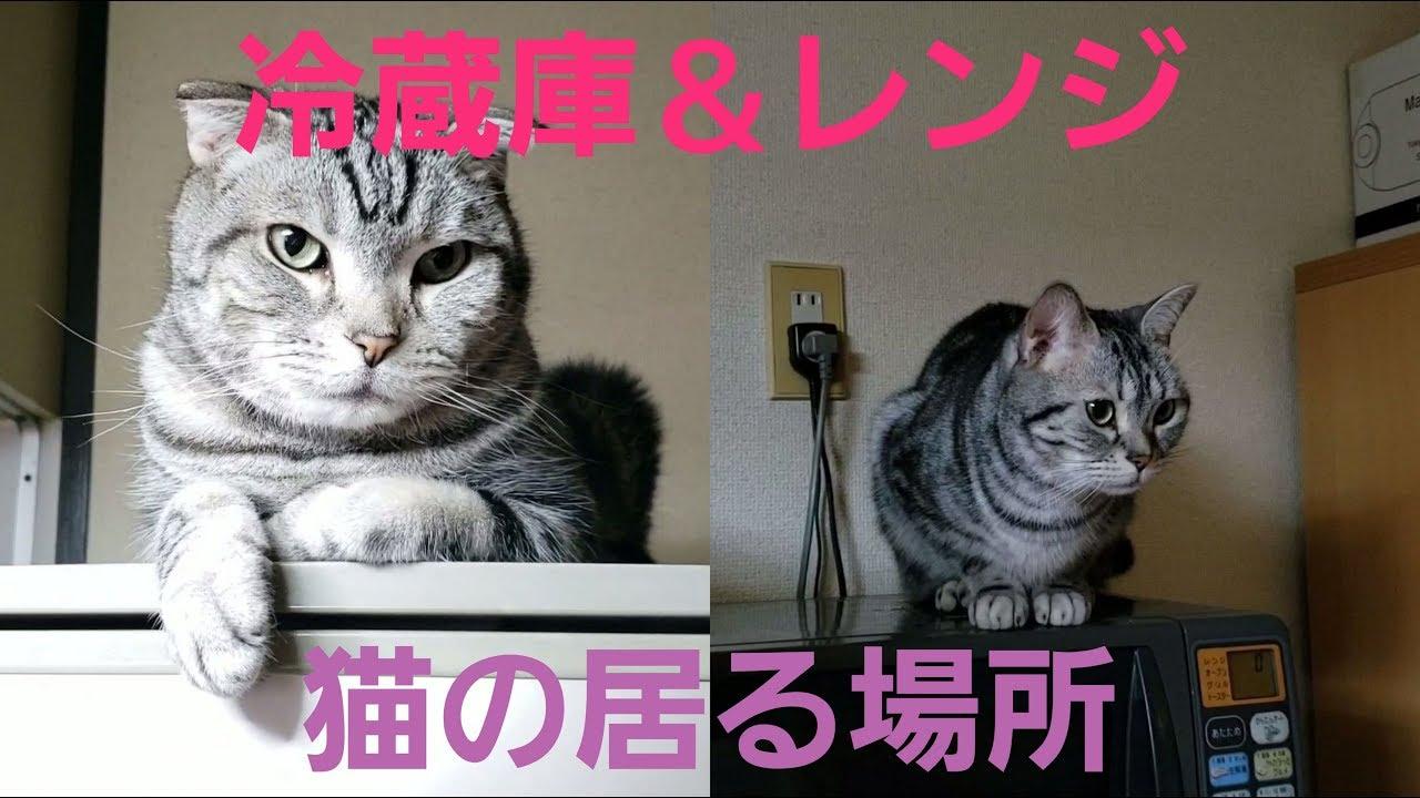 温まる〜♡電化製品の上は猫ちゃんだらけ〜!?