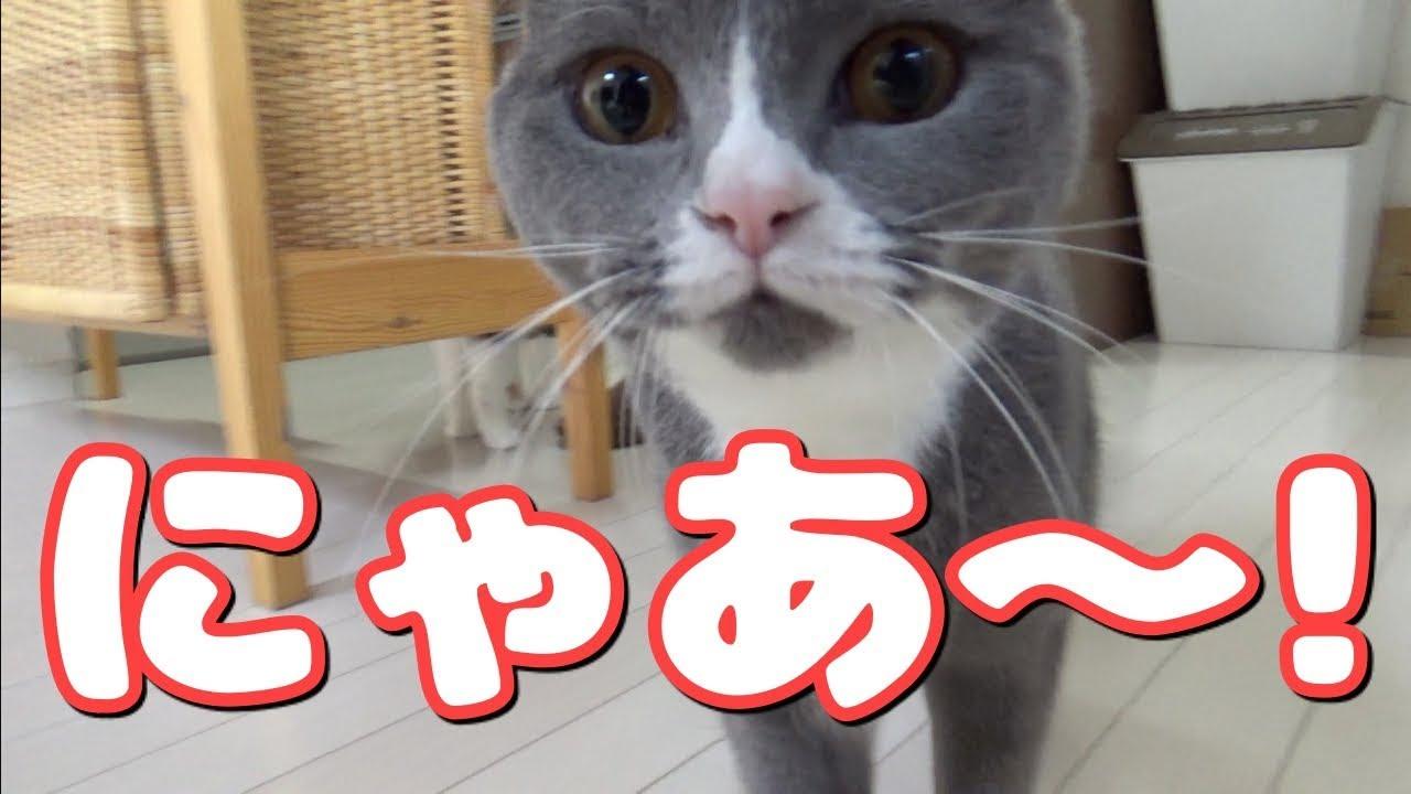 おねだり鳴きがかわいすぎる♡ヨーグルトが欲しい猫ちゃんたち