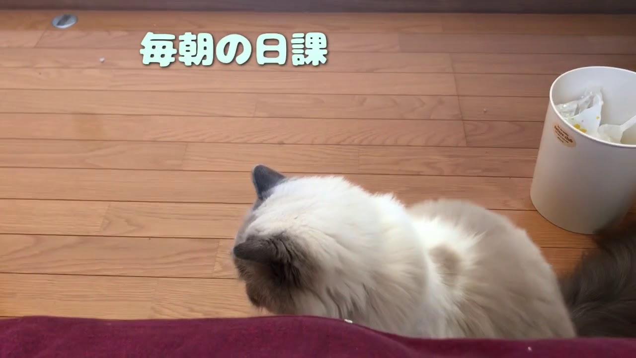 ねえねえ起きて〜?毎日飼い主さんを起こしに行く猫ちゃんに感動!♡