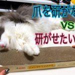 がんばれ!飼い主さんが猫ちゃんに熱血爪とぎ指導〜?♡