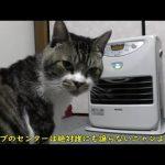 ストーブ点けて?おねだり上手なかわいい猫ちゃん♡