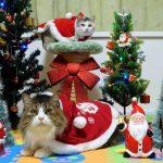 【クリスマス】猫ちゃんたちが可愛いサンタさんに大変身♡