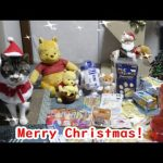 【クリスマス】ポンチョが可愛い!たくさんクリスマスプレゼントをもらった猫ちゃん♡