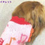 問い詰められて反省のポーズなダックスフンドちゃんが可愛すぎる〜!!