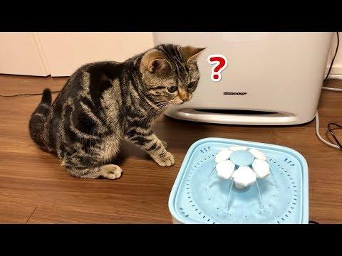 自動給水器に恐る恐る近づく子猫ちゃん♡気に入ってくれるかな・・・?