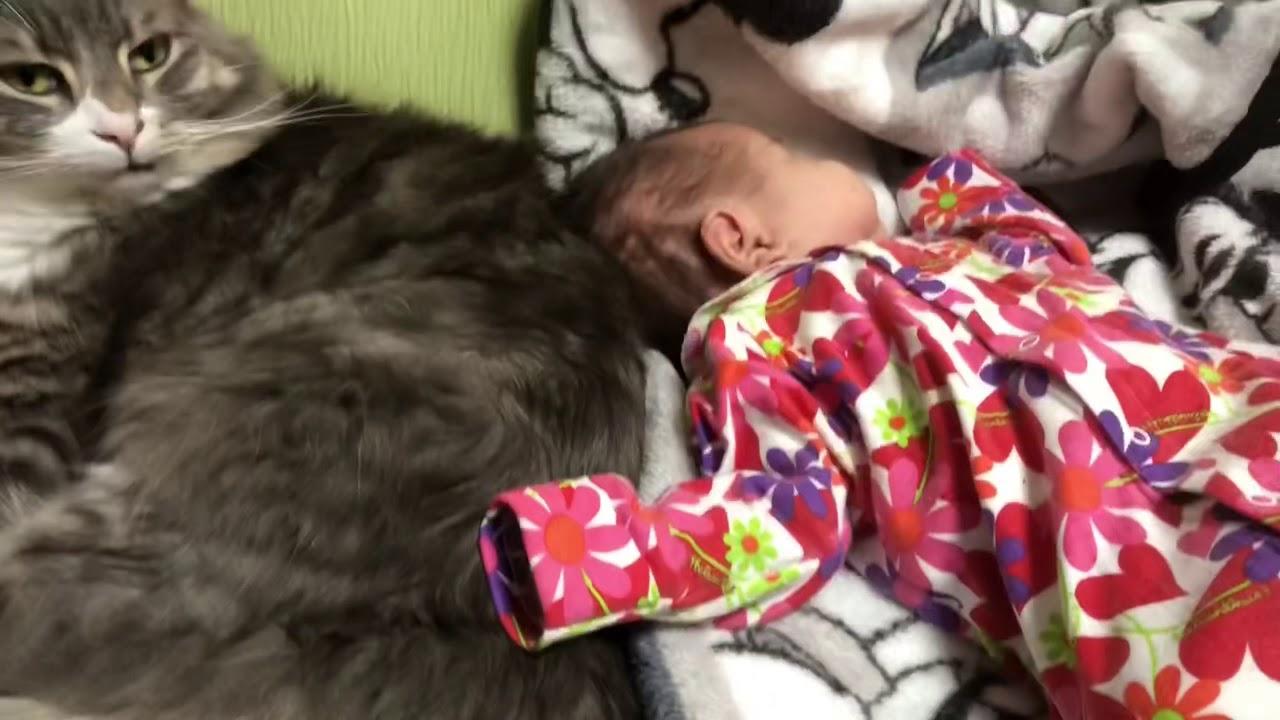 猫ちゃんと赤ちゃんが仲良くくつろいでいましたが・・・?♡