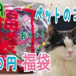 猫ちゃんのいるお家必見!猫ちゃん用福袋の中身は・・・?♡