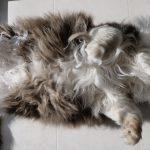 癖が強い♡ひっくり返って日向ぼっこする猫ちゃん(・∀・)