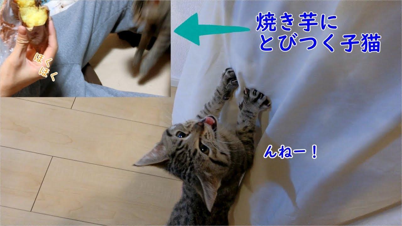 ほ〜し〜い〜!!焼き芋にものすごい食いつきな子猫ちゃん♡