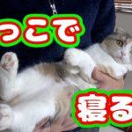 抱っこでゴロゴロ喉を鳴らしちゃう甘えん坊の猫ちゃん!♡