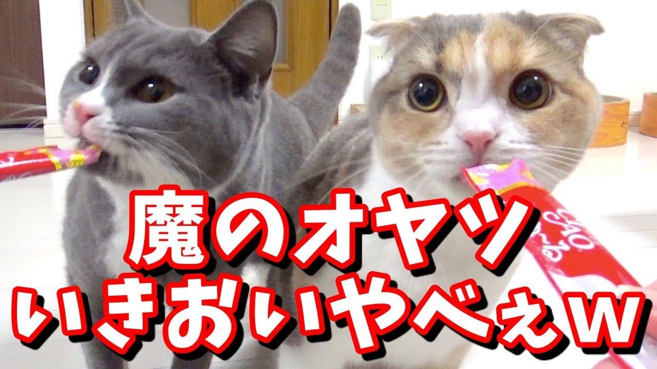 超カワイイ♡おやつを食べる姿があまりに夢中すぎる猫ちゃんたち!