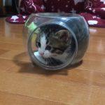 小さな透明ケースにスッポリ♡な子猫ちゃんが可愛すぎてたまらな〜い!