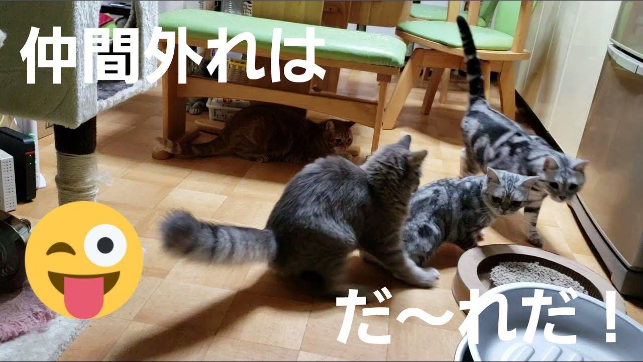 追いかけるもの違くない?レーザーポインターで遊んでいた猫ちゃんたちでしたが〜?♡