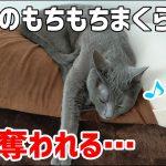 飼い主さん用の枕を全力で占領しようとする猫ちゃんたち♡