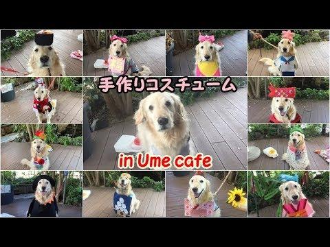 毎月違う衣装で記念撮影♡ゴールデンレトリバーちゃん7変化〜!