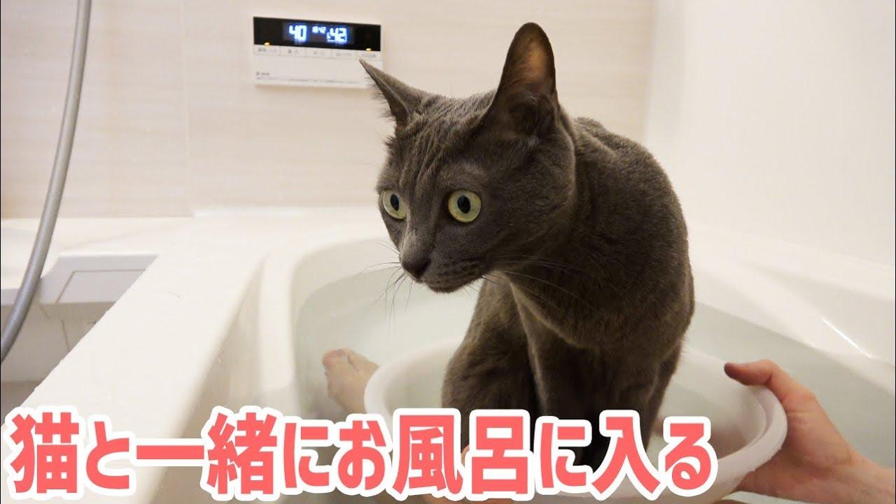 猫ちゃんを桶に入れて一緒に入浴!?羨ましすぎる件(*´ω`*)