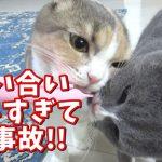 チューブを絞る万能おやつスプーンを使ったら猫ちゃんたちがもう夢中!♡