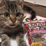 マタタビドーナツでテンション上がりまくりな子猫ちゃんが可愛い(*´ω`*)