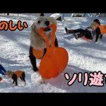 雪遊びに大興奮♡なゴールデンレトリバーちゃん(*´ω`*)