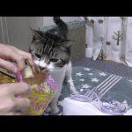 鰹節をもっと食べたい!あと一歩のところで飼い主さんに阻止されてしまう猫ちゃん♡