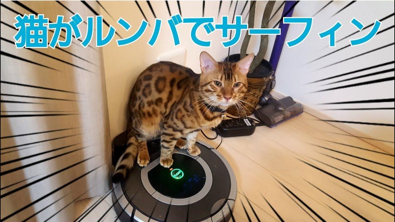 まるでサーフィン♪ルンバを乗りこなすベンガル猫ちゃん♡