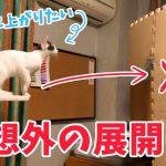 バリケードもなんのその!デスクめがけてスーパージャンプする猫ちゃん♡