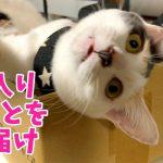 箱にすっぽり♡ジャストサイズな猫ちゃんが可愛い〜(*´ω`*)